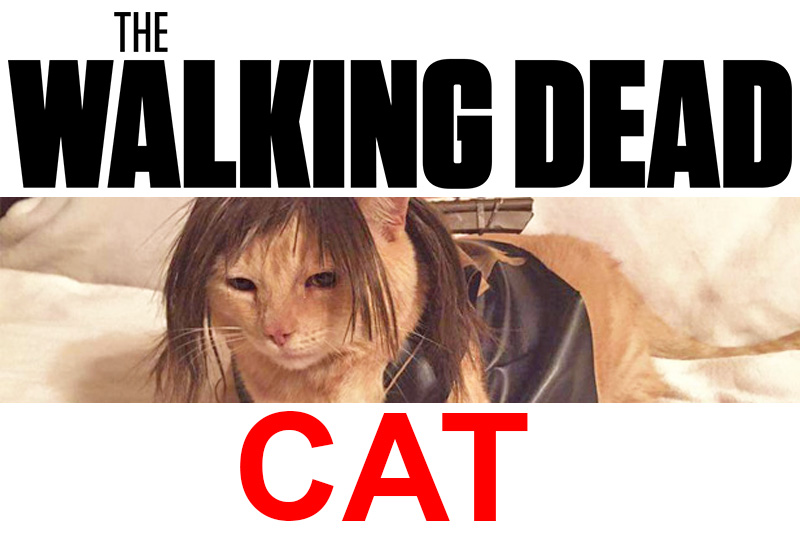 local-records-office-cat-walking-dead-daryl
